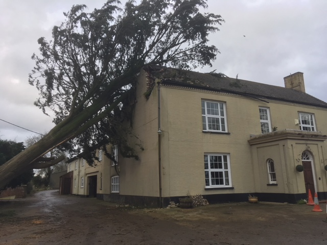 Tree and storm damage